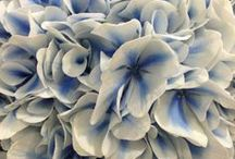 : Flower Power :