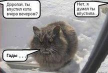 УЛЫБНИСЬ. / Юмор, анекдоты о кошках и котах, кошачьи мемы и мн. др.