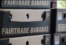 Banana Business / The banana industry and its...