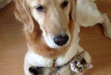Tender Pets / A few funny pics & memes