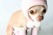 Tiny Dogs / Cuties dogs EVER!