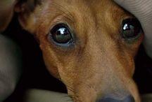Animals Friends :-) / by Kathy Barbella