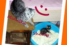 My cats Miňka & Shelby & Chicco / ♥