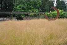 grasses / grasses really brings gentle movement to your outdoor space