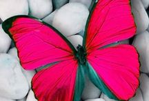 Butterflies  / Some nice pics about