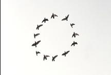 BIRDS • / Чистота линий, изысканность форм