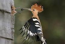 Birds / madarak világa 2017.02.28 2016.09.07 2016.07.28 2016.03.30 ... 2015.ápr