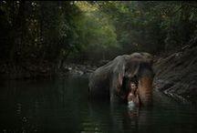 Nature photos / Such a wondweful world!