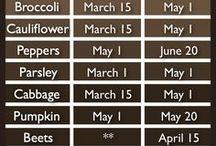 Gardening idea / kertészeti ötletek 2017.03.23 2016.10.10 2016.08.02 2016.04.14 2014.nov.26.