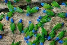 Parrots / papagájok 2017.07.27 2016.10.03 2016.06.28 2016.02.29 ... 2015.03.02.