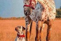 friendship / különös barátságok 2017.06.23 2017.02.20 2016.09.07 2016.07.05 .. 2015.ápr