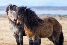Horses / Lovak  2016.10.11 2016.04.08 k: 2016.márc.9