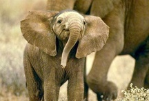 I <3 Elephants / by Laurie M