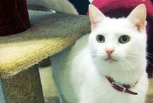 Our Cats!! / Check out what these four legged friends get up to during their customised holiday!