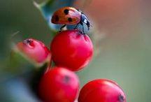 Macro / >details of nature<