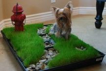 Cool stuff! / Cool pet stuff we think is cool and awesome!