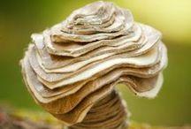 Mushrooms / Cuz I love em!