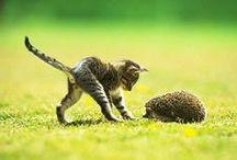 macskatárs