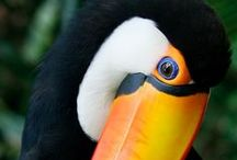 Birdies / science_nature