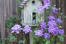 Outdoors/ gardening