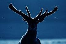 Oh my deer...