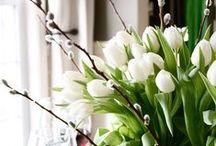 Season: Spring is comming