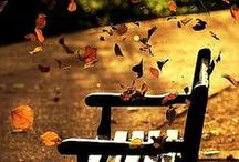 Season: Fall in love