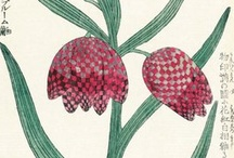 Kew Print on Demand / Beautiful botanical art and stunning photography available as prints for your home.