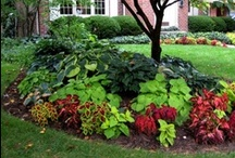 Gardening / by Kim Blackwell