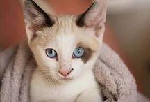 Les chatons les plus mignons - Cutest Kittens Ever / Toutes les photos les plus mignonnes de chatons