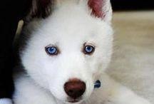 Les chiots les plus mignons - Cutest Puppies Ever / Toutes les photos les plus adorables de chiots
