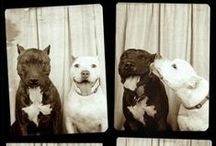 Foto Booth / by Janice Challen