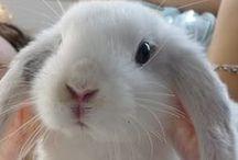 Les adorables rongeurs et lapins de Wamiz / Les rongeurs inscrit à http://wamiz.com/rongeurs