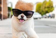 Chiens stars célèbres - Famous dogs / Retrouvez les chiens stars du web dans ce tableau