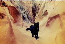 Chats et voyage - Cats and travel / Retrouvez tous les road-trip de nos chats préférés