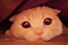 Chats stars célèbres - Famous cats / Retrouvez les chats stars d'internet dans ce tableau