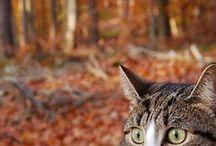 Les Wamiz célèbrent l'automne ! / Chiens, chats, rongeurs, lapins et autres animaux fêtent l'arrivée de l'automne !