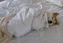 Les photos de chiens les plus drôles / Retrouvez toutes les photos de chien les plus drôles du web