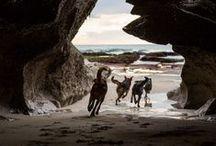 The Shepherd's Realm par Andrew Fladeboe