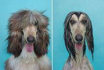 """Dry Dog Wet Dog par Serenah Hodson, / Dry Dog Wet Dog, """"chien sec chien mouillé"""" en français, est le nom de la dernière série de photo réalisée par la célèbre photographe spécialiste des toutous Serenah Hodson"""