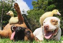 Les plus belles amitiés entre animaux - Animal Friendships / Les plus belle amitiés entre animaux réunies en un tableau. Retrouvez les animaux de compagnie en présence de leurs amis.