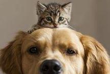 Comme chiens et chats - Cats And Dogs Best Friends / Les plus belles amitiés entre chiens et chats