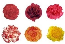 Wholesale Items / Flowers never lose their value!
