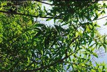 Viva Verbena! / Aνάμεσα σε όλα τα αρωματικά βότανα που φυτρώνουν στα μονοπάτια της Προβηγκίας, αναπτύσσεται κι ένα που με τη λεμονί φρεσκάδα του, αναζωογονεί σώμα & πνεύμα. Ονομάζεται VERBENA. Τα φρεσκοκομμένα, πράσινα φύλλα μαζεύονται σε μεγάλα καλάθια, αρωματίζοντας τον αέρα με το διακριτικό άρωμά τους στις αγορές της Προβηγκίας. Ανακαλύψτε τη συλλογή μας, που περιλαμβάνει αρώματα και καλλυντικά φροντίδας για σώμα και μαλλιά.