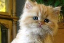 Gatos!! u.u