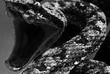 Serpens / Estote prudentes sicut serpentes...