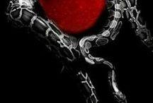 BLACK - RED & WHITE