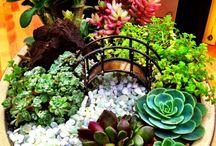 Suculentas, terrariums y jardín