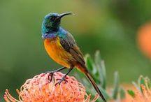Birds  / by Ann Campbell