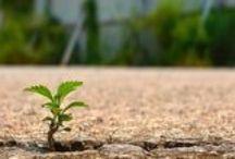 Growth / Vækst / En af de grundlæggende værdier hos WEBwoman KOMMUNIKATION